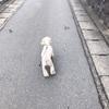た〜くさんお散歩🎶