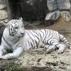 4歳の娘と2人で埼玉の東武動物公園へ行ってきた!