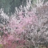 春季大護摩祭を行いました ~ 季節はずれの雪降る中で ~