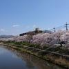 桜前線をこえて