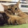 【猫さんと暮らす】お誕生日おめでとう!