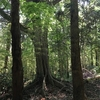 気楽に入った森で遭難しかけた話【日記】
