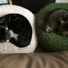 犬と猫を一緒に飼うポイントとは!? 習性・食事・トイレについて