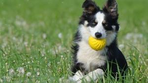犬好きさん、注目!わんこのすばらしさを表す英語表現