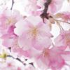 2017年3月の振り返り。今年はまだ、花粉の猛威が、ワタシ的には例年ほどではないのが、せめてもの救いです。^^;;