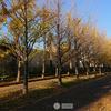 地域振興のためのスマホ写真活用(5)(darktable3.0第107回)