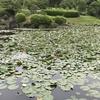 「マダム倶楽部活動」報告 金立公園と葉隠ロードを歩いた両日♪ 6月18日、19日