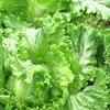 食品添加物の必要性と食品衛生について