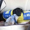 170515 介助犬ボランティアを続けている理由