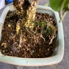 盆栽の土が減っちゃったのですがどうしたら良いですか?