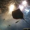 期待は、ウナギらない!?浜名湖体験学習施設「ウォット」を詳しくご紹介