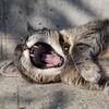 【猫との対話#8】仲間は必要?どうやって見つける?~Tさんのご質問を題材に~
