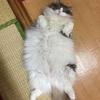 猫の1日に密着。我が家のにゃんこの過ごし方とスケジュールを追跡