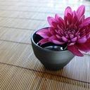 禅宗寺 ブログ