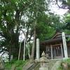 周梨槃特の巨木コレクション(未完)