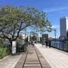 汽車道  横浜市中区新港