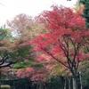 子連れでお出かけ。2018年紅葉狩り「埼玉県新座市 平林寺」へ行きました。