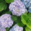 お花とくらす生活【季節を感じる〜梅雨〜】