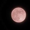6月の満月ストロベリームーンは赤くなかった【Under the Strawberry moon】
