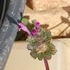 春色の陽ざし、鳥の餌台追加、ホトケノザ開花