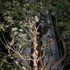 怪しい樹影