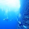 ♪地形に魚影に透明度どれも凄い慶良間♪〜沖縄慶良間ファンダイビング♪