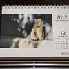 今年も自分で撮った写真を使ったオリジナルカレンダーをキンコーズで作りました