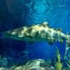 水族館にいたサメについて淡々と記録するよ②バンコク・オーシャンワールド編