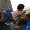 猫と次男10ヶ月の驚きの関係