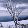 桜が咲こうというこの時期に、那岐山の上では氷の花が咲いていた