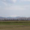 手取川堤桜