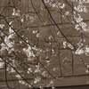桜、フェネック登場、ダマイのパンチ、サーバルやはりホームは良い。