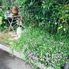 1からの花壇作り その5
