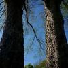 秋の樹の春