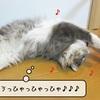 猫の道具 ~またたびボール(むく編)~