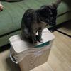 【無印良品】木製ごみ箱・角型のフタ、猫のいる暮らしにマッチ!