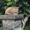 文明の利器を使いこなす猫がいる【のら猫テル坊日記その2】