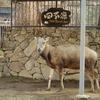 多摩動物公園 他のみなさん
