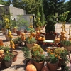 オレンジ色のかぼちゃが至る所に・・・・