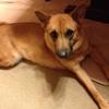 アニマルコミュニケーションで保護犬ビビちゃんと話してみました!