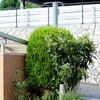 マンション花壇