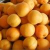 6月に使った野菜果物は、2人で約23kg!