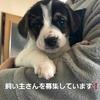 子犬の飼い主さん募集の協力