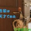 ドアを開ける猫~Cat opening the door~