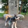 天橋立で走り回る犬