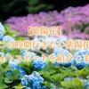 【紫陽花フォト】この時期行きたい紫陽花フォトスポット紹介します