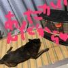 甲斐犬サンの『閑話休題』の巻〜タマニハ息抜キシナキャネェ╰(*´︶`*)╯♡
