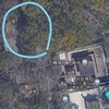 下賀茂神社の植生 Part2(2021年4月10日)