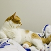 【愛猫家のレビュー】Perfumeの「かしゆかの寝ても覚めても猫」。