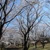 多摩川桜百景 -28. 富士見台公園-